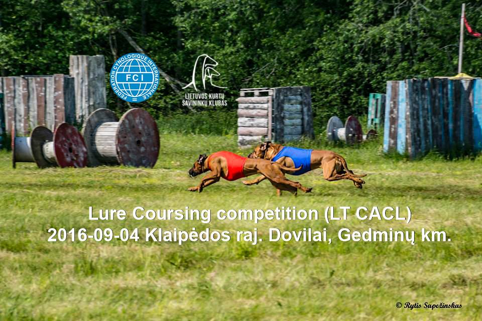 National Lure Coursing competition (LT CACL) 2016-09-04